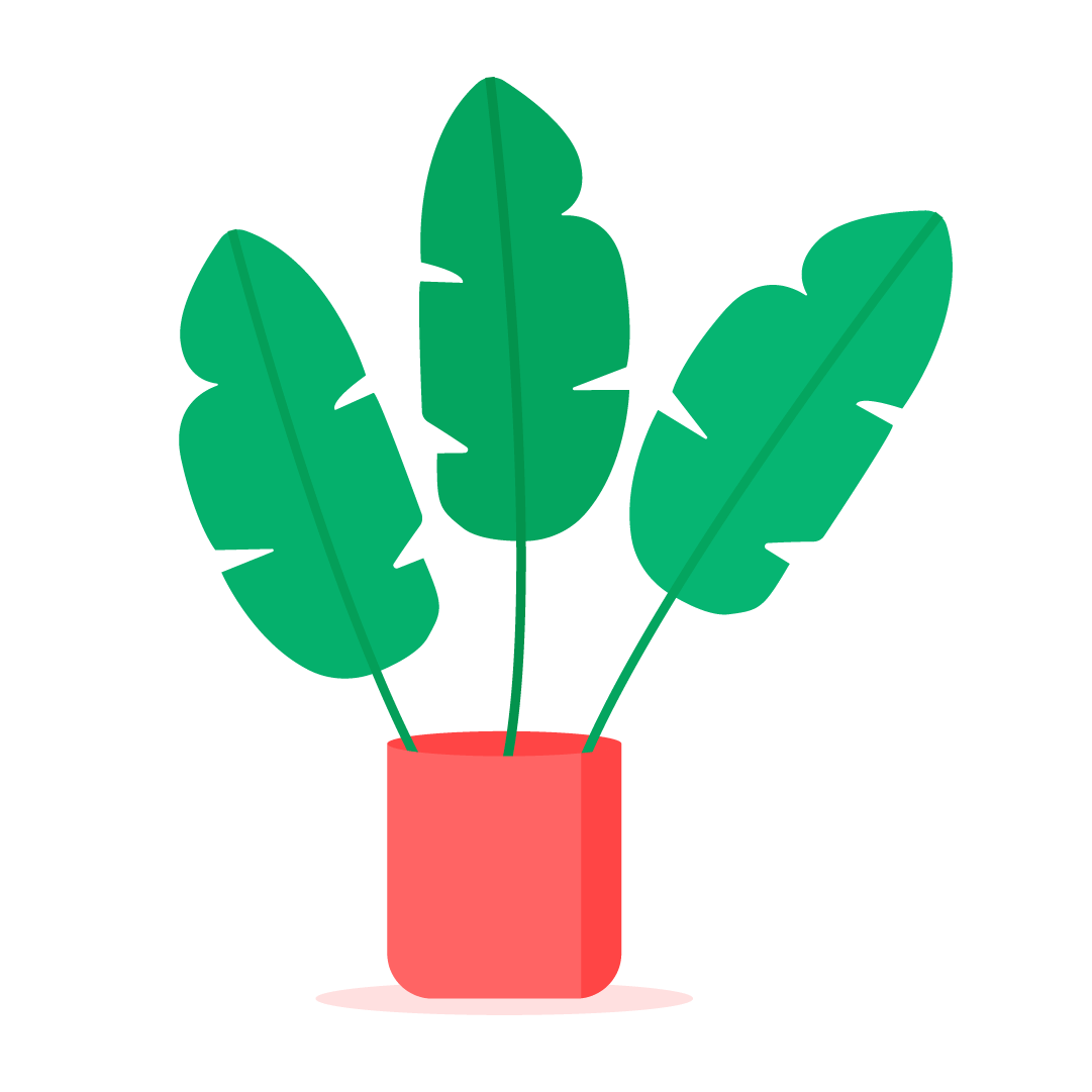 Vector illustration of a Banana Plant - Musa Dwarf Cavendish in flat design style