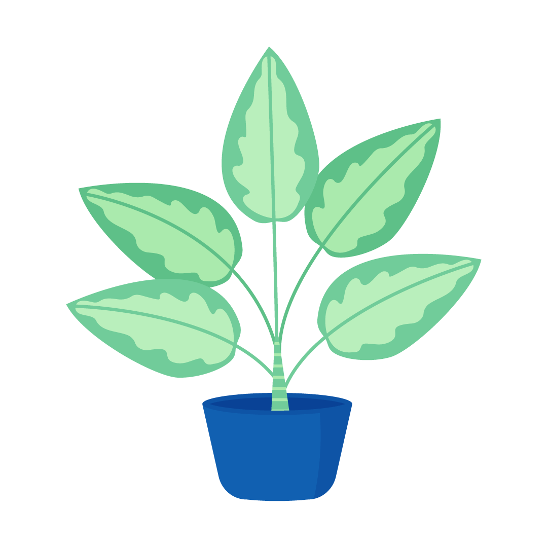 Vector illustration of a Dieffenbachia Camille - Dumb Cane Plant in flat design style