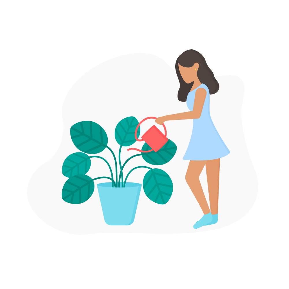 Flat illustration of a woman in a light blue dress, watering Calathea Orbifolia Plant using red watering can