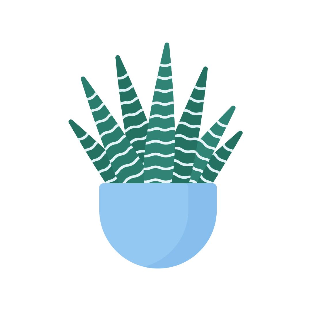 Vector illustration of a Haworthia Attenuata - Zebra Plant in flat design style