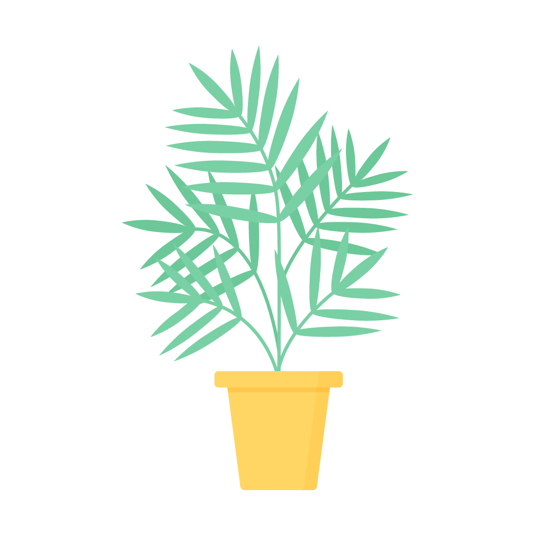 Vector illustration of Areca Palm (Dypsis Lutescens) Plant in flat design style