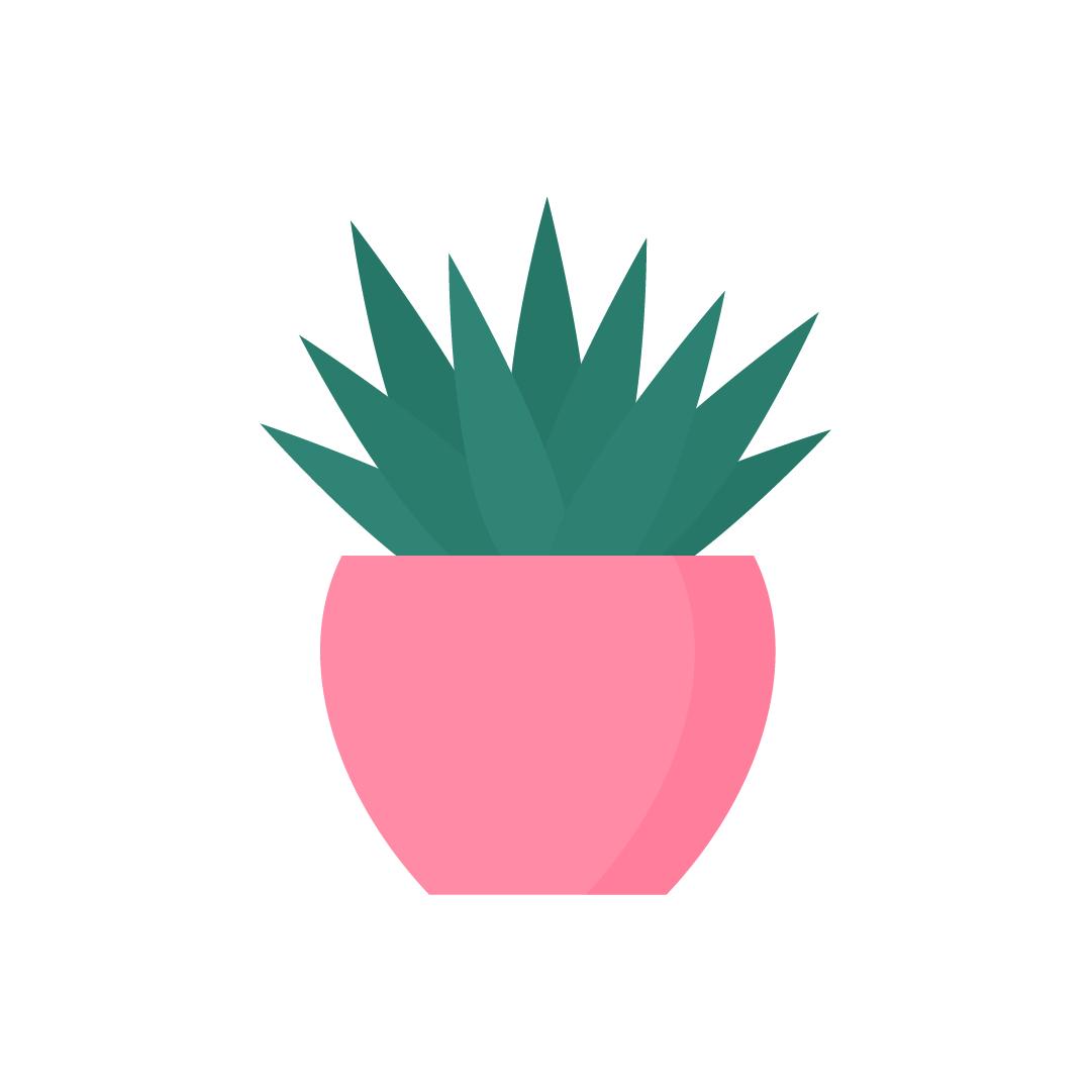 Vector illustration of Agave Shaka Zulu Plant in flat design style