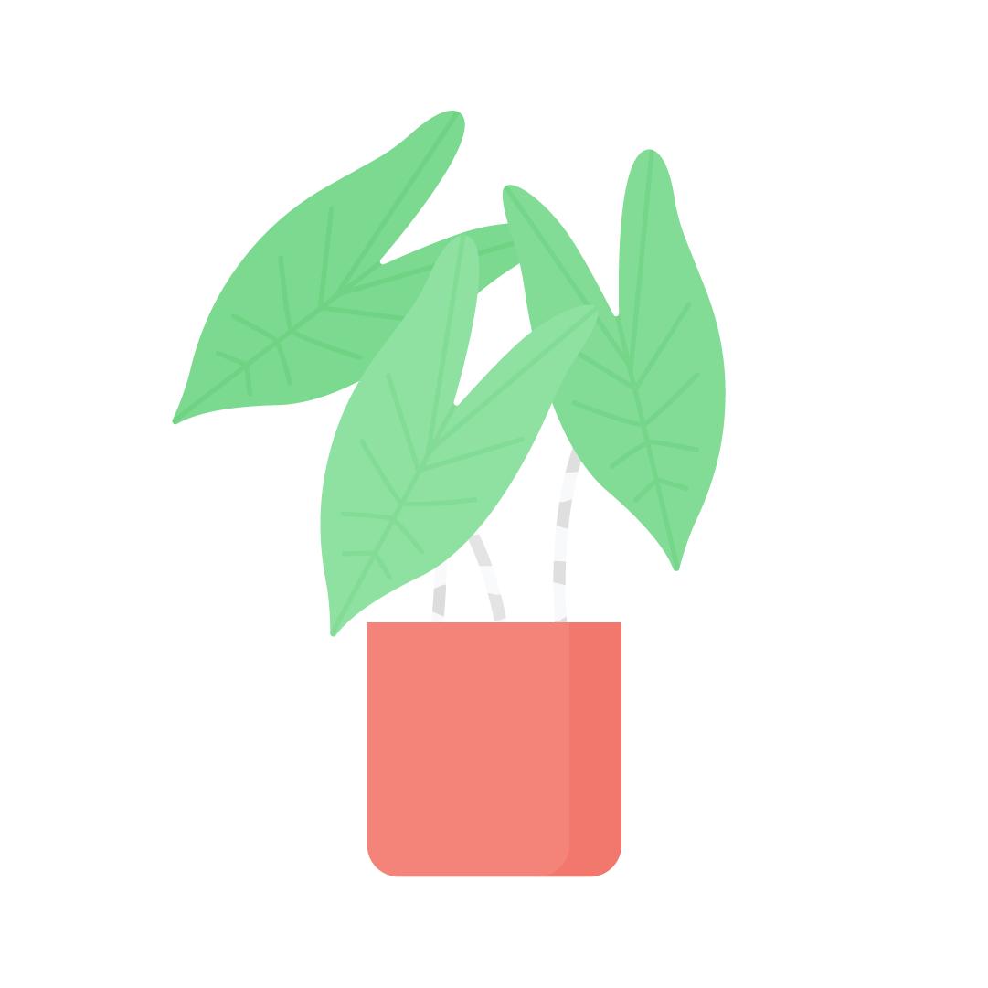 Vector illustration of Alocasia Zebrina Plant in flat design style