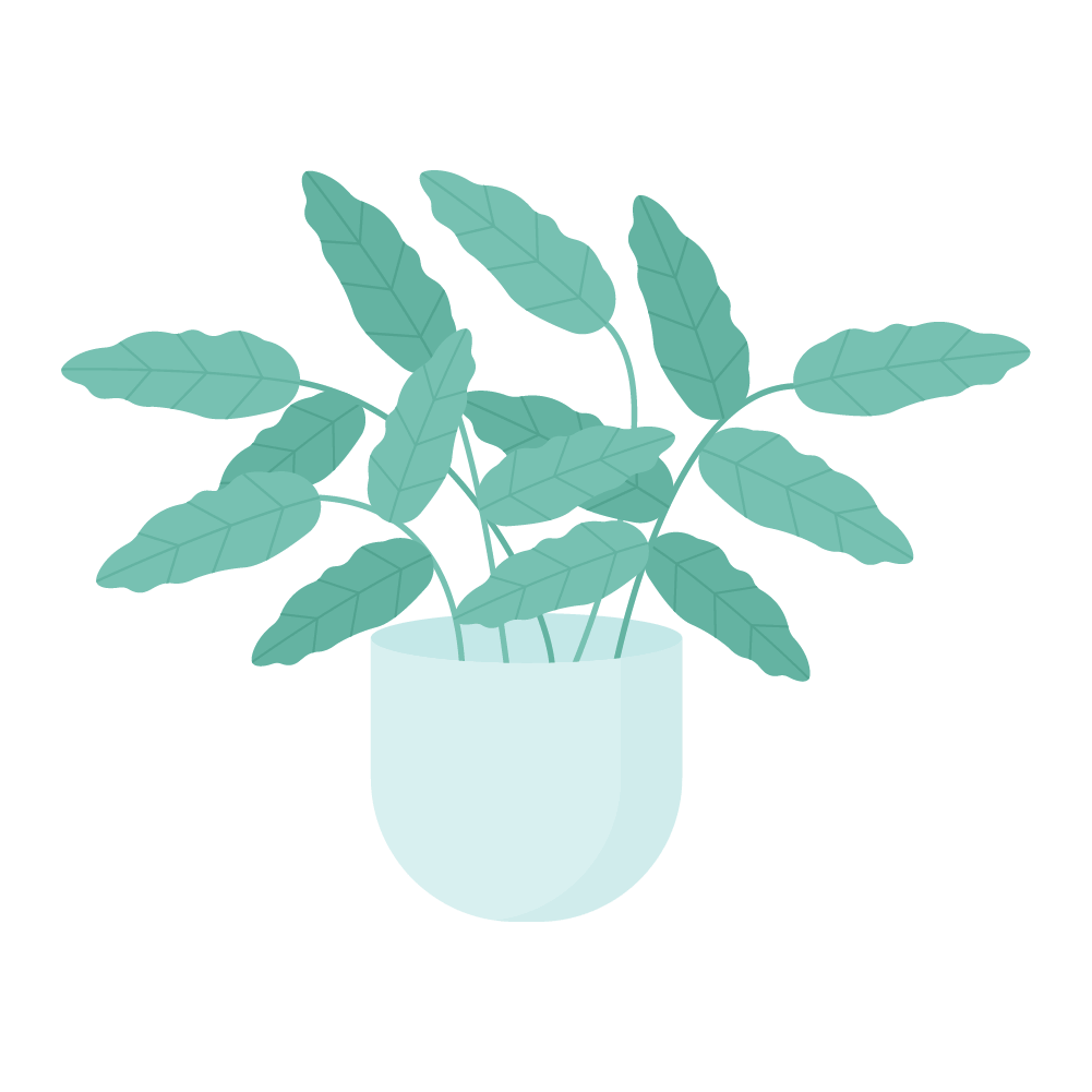 Flat illustration of Coffee Arabica Plant in mint pot